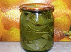 соленые виноградные листья рецепт с фото