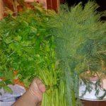 Как сохранить зелень ароматной и свежей надолго
