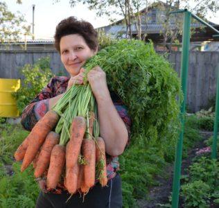 Я морковь сею следующим образом