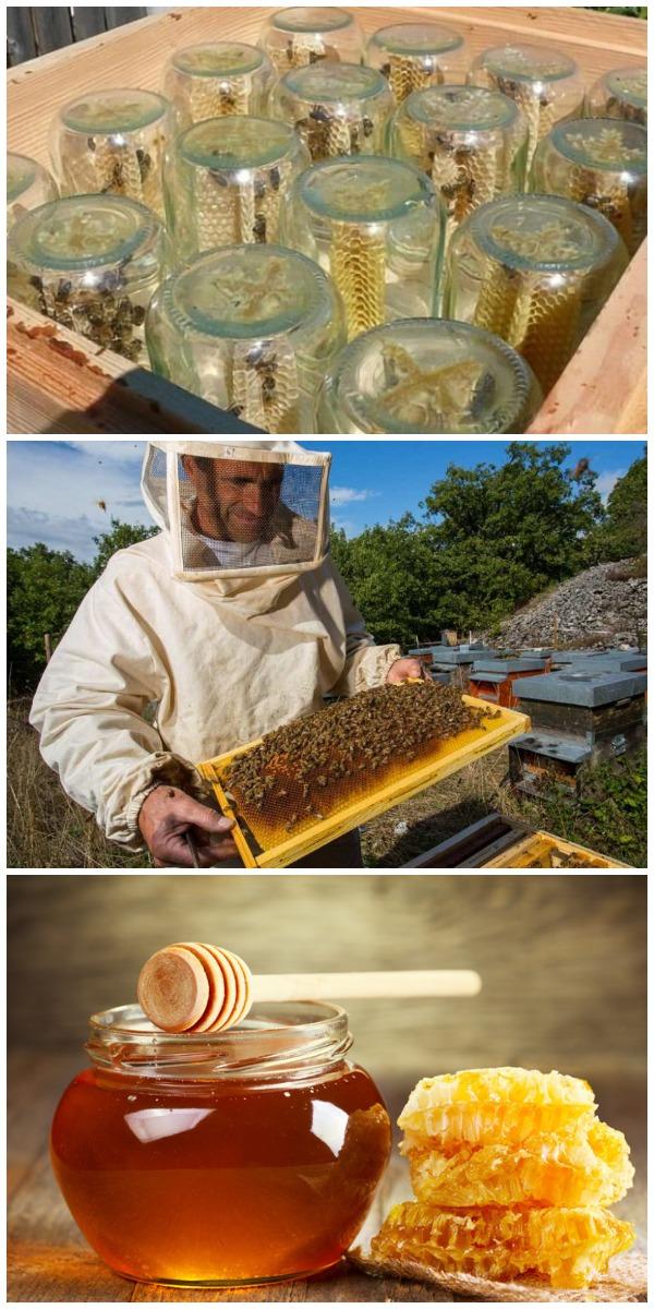 Пчеловод заработал состояние на мёде благодаря простой конструкции. Посмотри, что он сделал!